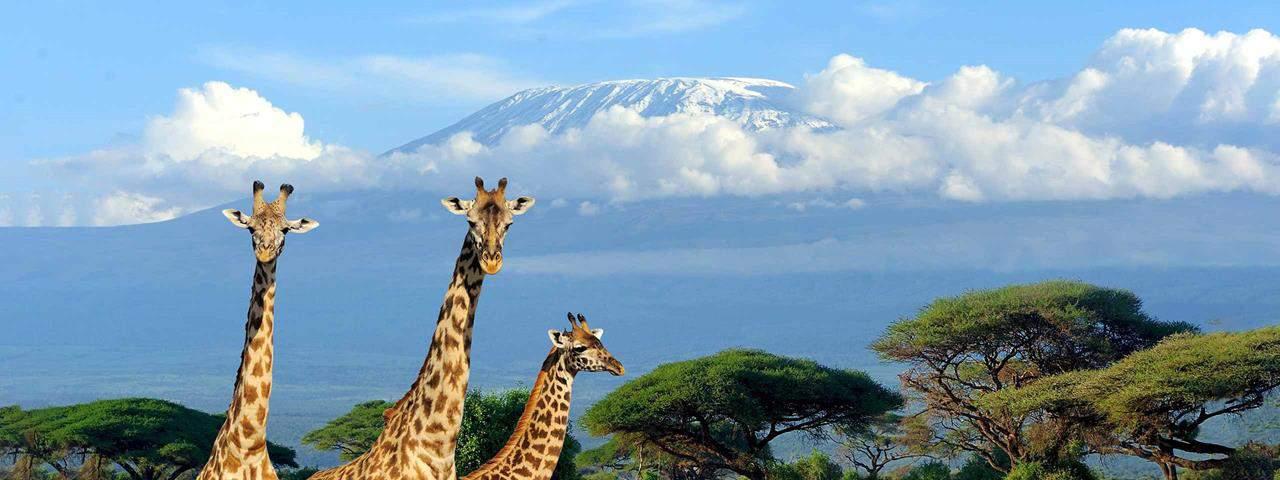 Mt Kilimanjaro and Giraffes